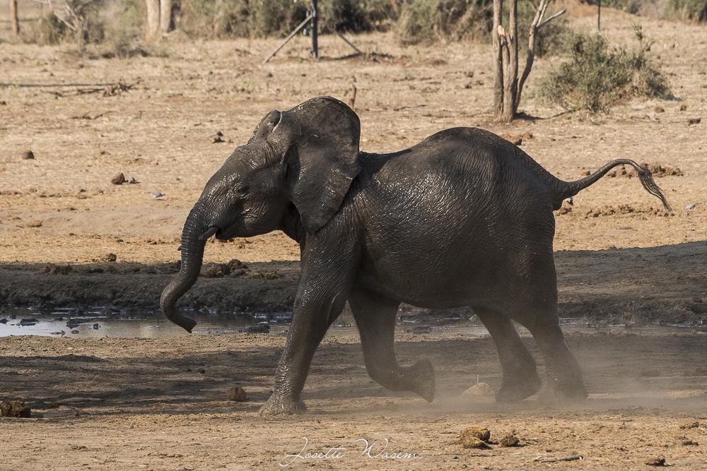Botswana….nouvel épisode