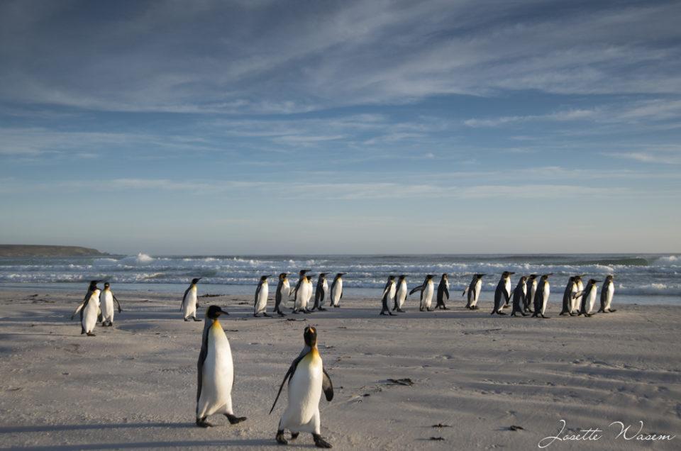 Iles Falkland (ex Malouines)