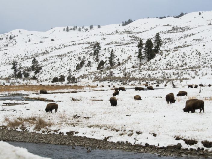 Etats-Unis (Yellowstone)